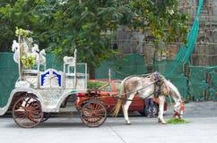 Лошадь обузданная с экипажом Стоковое Изображение