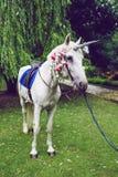 Лошадь одетая как единорог с рожком Идеи для photoshoot венчание партия напольно стоковые фото