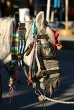 Лошадь одетая для торжества Стоковые Фото