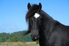 лошадь одичалая Стоковые Фото