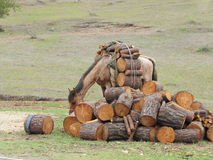 Лошадь пакета Стоковое Изображение RF