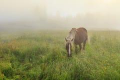 Лошадь пася на красивом луге цветка Стоковое Изображение