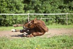 Лошадь падает вниз авария Стоковое Изображение RF