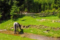 Лошадь подавая около реки горы стоковая фотография