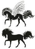 лошадь подогнали pegasus, котор Стоковое фото RF
