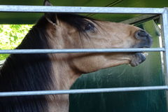 Лошадь подробно в ферме Стоковое фото RF