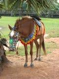 Лошадь привязанная к дереву Стоковое Фото