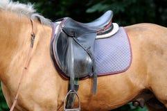 Лошадь проводки Стоковое Изображение
