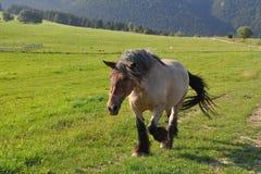 Лошадь проекта в ландшафте slovakei Стоковые Фото