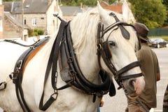 Лошадь проекта Стоковая Фотография RF