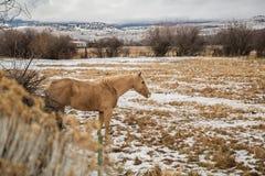 Лошадь самостоятельно Стоковая Фотография