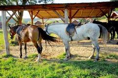 Лошадь семьи Стоковое фото RF