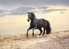 Лошадь скачет на заход солнца стоковое фото