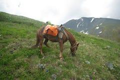 Лошадь среди зеленой травы в природе коричневая лошадь Пасти лошадей в деревне Стоковая Фотография