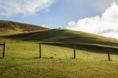 Лошадь стоя величественно в одиночку na górze холма Стоковое Изображение RF