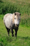 Лошадь стоя в поле Стоковые Фотографии RF