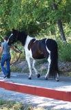 Лошадь с предпринимателем Стоковая Фотография RF