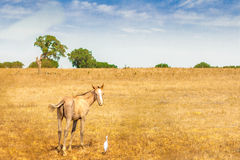 Лошадь с птицей Стоковое фото RF
