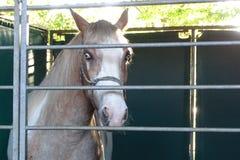 Лошадь с редкими глазами в ферме Стоковое Изображение