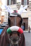 Лошадь с рожками северного оленя стоковые фото