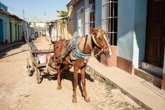 Лошадь с фурой проводки Стоковая Фотография