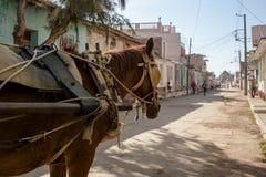 Лошадь с фурой проводки Стоковые Фотографии RF