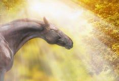 Лошадь с хорошей шеей на предпосылке листьев осени Стоковые Изображения
