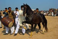 Лошадь танцев Стоковые Изображения RF