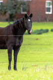 Лошадь темного коричневого цвета - вертикаль стоковое фото