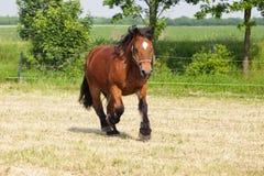 Лошадь тележки на paddock стоковая фотография rf