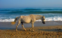 лошадь унылая Стоковые Изображения