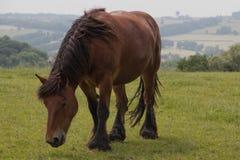 Лошадь фермы в природе Стоковая Фотография RF