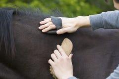 Лошадь холить мальчика Стоковые Фотографии RF