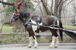 Лошадь экипажа Нью-Йорка Стоковое Фото