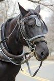 Лошадь экипажа Нью-Йорка Стоковые Изображения RF