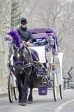 Лошадь экипажа Нью-Йорка Стоковая Фотография RF