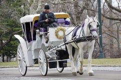 Лошадь экипажа Нью-Йорка Стоковое Изображение RF