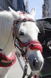 Лошадь экипажа Нью-Йорка Стоковые Фото