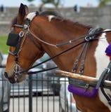Лошадь экипажа Стоковое фото RF