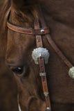 Лошадь Стоковые Фото