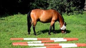 Лошадь видеоматериал