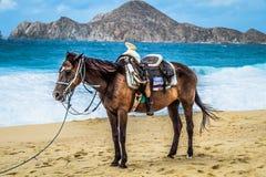 Лошадь Cabo стоковое фото