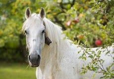 Лошадь eden Стоковые Изображения RF