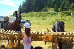 Лошадь feedeng девушки на выставке поголовья Стоковое Фото