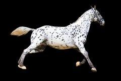 Лошадь Knabstrup Стоковая Фотография