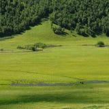 Лошадь Longly Стоковые Изображения RF