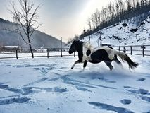 Лошадь wiew холодной зимы красивая Стоковое Изображение RF
