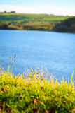 Луга ландшафта Ирландского на реке Co Cork, Ирландия Европа Стоковые Фото