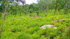 Луга леса Стоковые Изображения RF