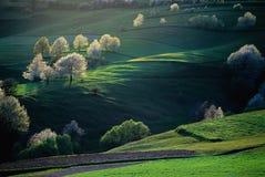 Луга с светом Стоковая Фотография RF